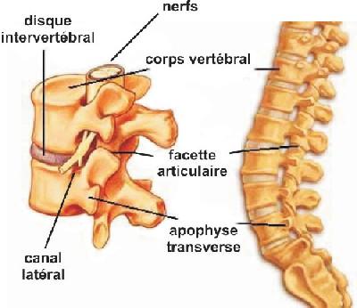 colonnevertebrale.jpg