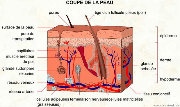 La pigmentation de la peau sur la personne le nettoyage